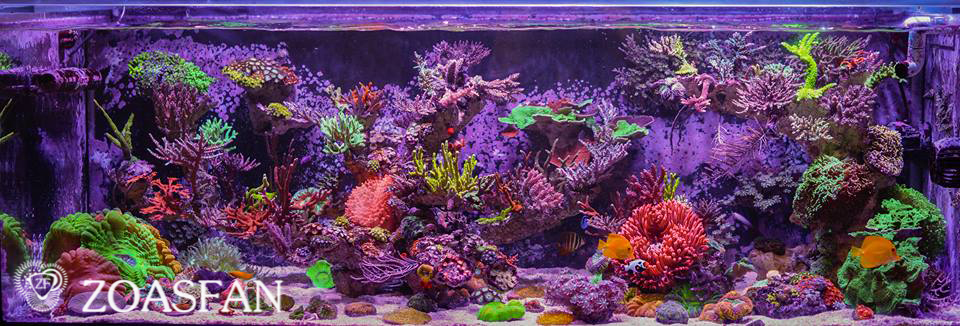 Jourdan Sy marine reef